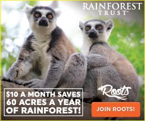 1513801379-rainforest_2017_save_roots_300x250