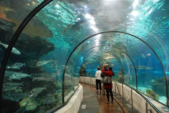 vinpearl-aquarium-times-city1