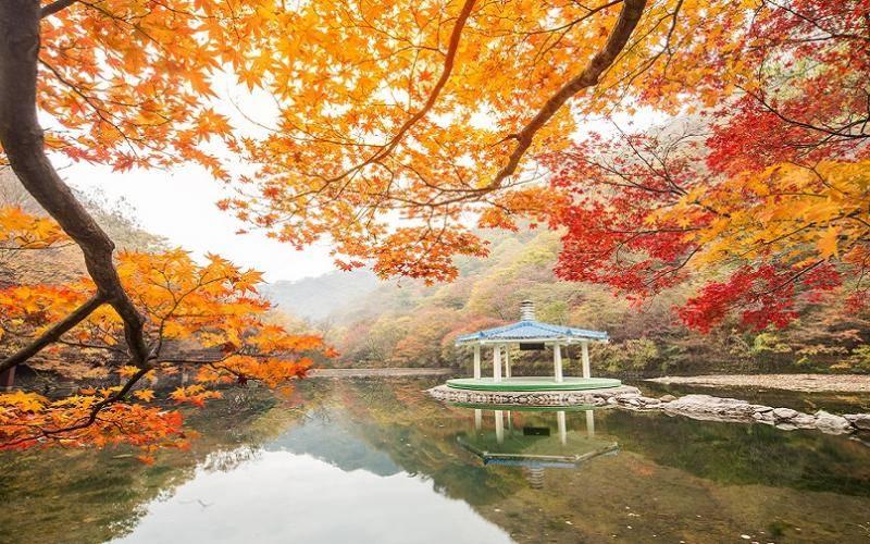 du-lich-han-quoc-thang-11-2017-1fall-leaves-korea
