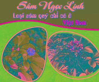 rau-dac-san-lang-son-bannertb06071601