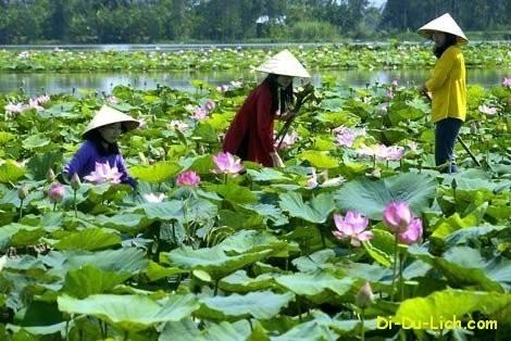 cac-dia-diem-du-lich-noi-tieng-o-cao-lanh-dong-thap-696