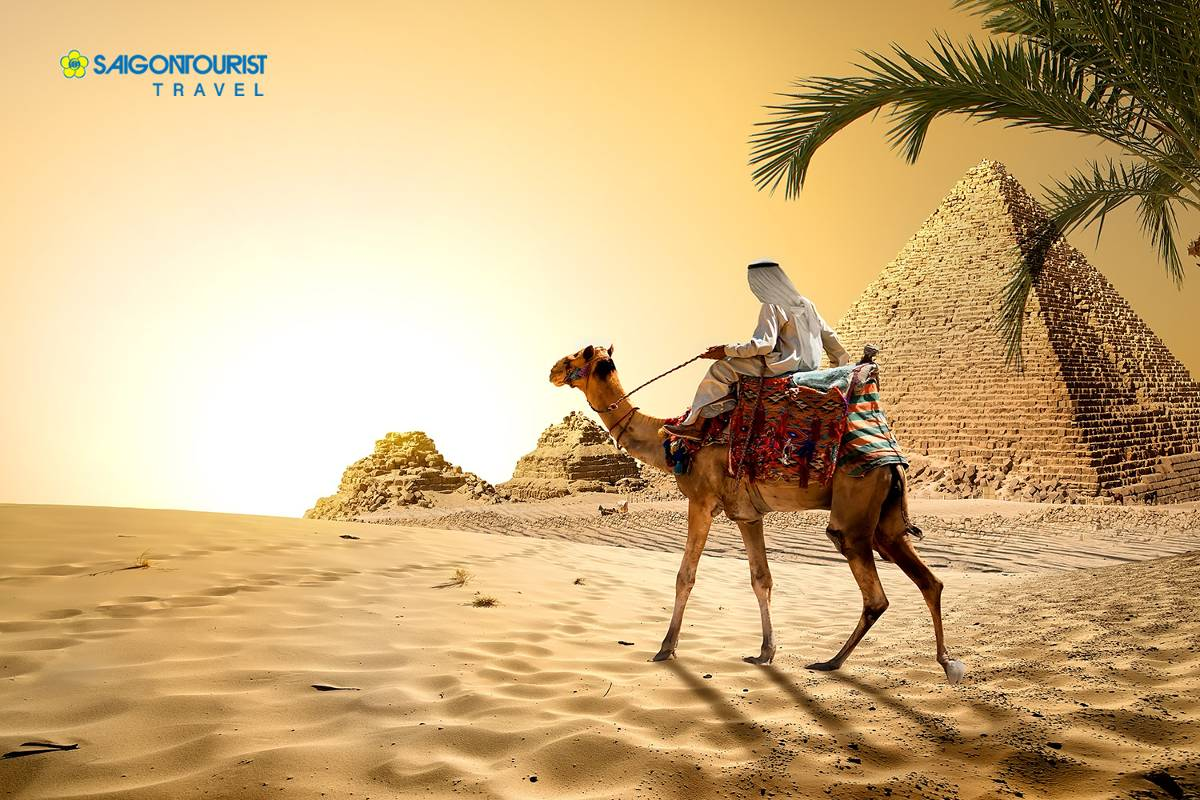 du-lich-ai-cap-camel-near-pyramids-in-hot-desert-of-egypt-350532167