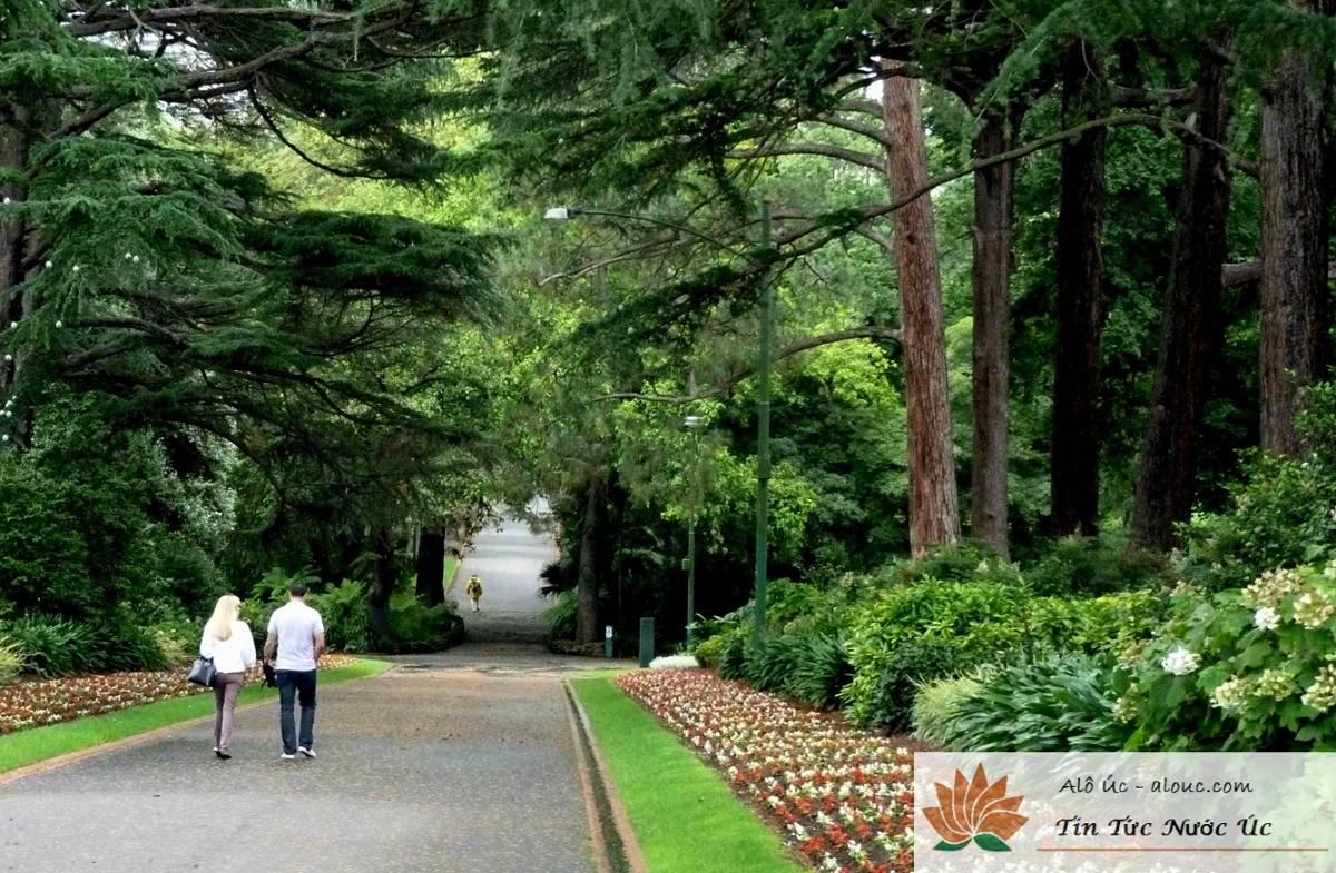 mua-thu-o-uc-dam-say-mua-thu-melbourne-fitzroy-gardens