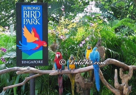 du-lich-singapore-tu-tuc-dia-diem-khong-the-bo-qua-khi-du-lich-singapore-1