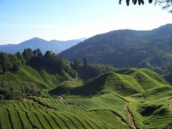 dia-diem-du-lich-malaysia-du-lich-malaysia-qua-10-dia-danh-tuyet-voi-nhat-ivivu-8