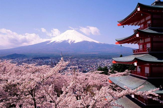 du-lich-nhat-ban-can-bao-nhieu-tien-fuji-cherry-blossom-1411374846461-crop-1411374856479