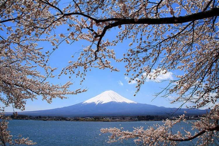 y-nghia-hoa-anh-dao-nhat-ban-fuji-sakura-750-500