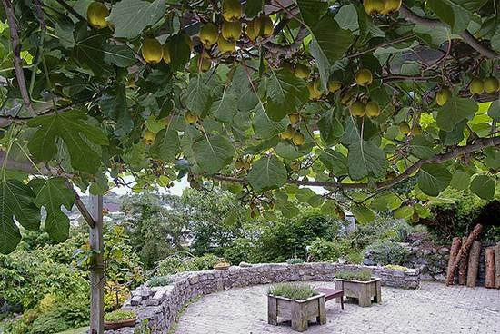 am-thuc-new-zealand-garden-kiwi