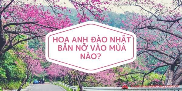 hoa-anh-dao-nhat-ban-no-vao-thang-may-hoa-anh-dao-nhat-ban-no-vao-mua-nao
