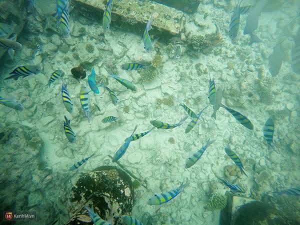 du-lich-maldives-tu-tuc-img-3048-9329c
