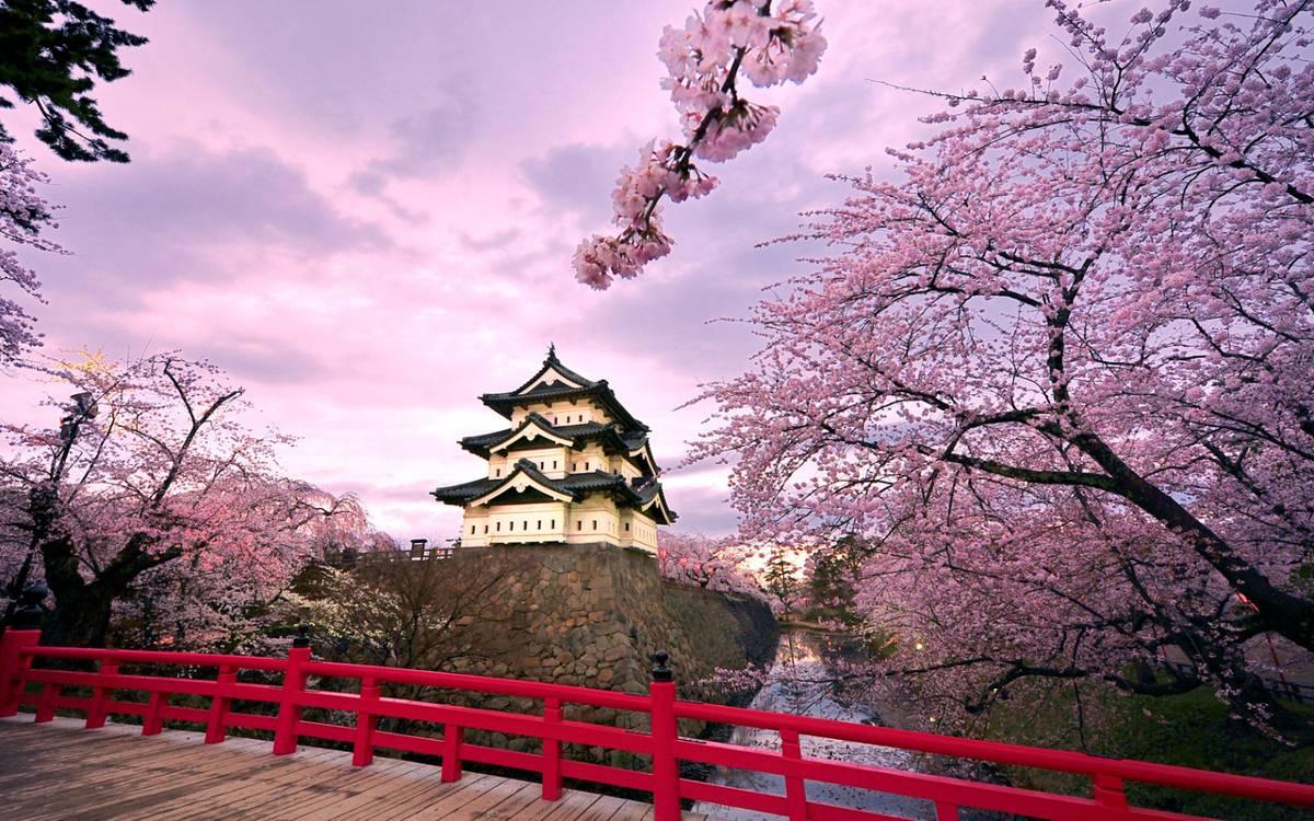 su-tich-hoa-anh-dao-japan-sakura-castle