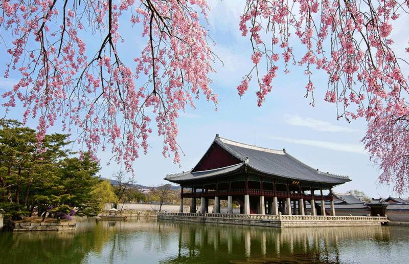 mua-hoa-anh-dao-han-quoc-2018-korea-cherry-blossoms-seoul-gyeongbukgung-palace