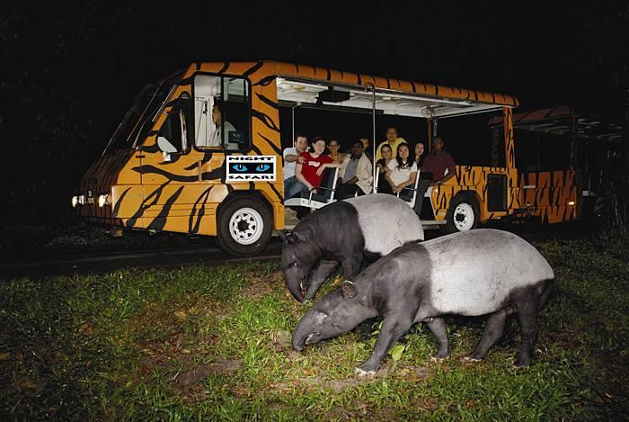 dia-diem-du-lich-singapore-night-safari-singapore-2