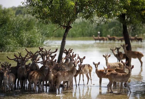 du-lich-thai-lan-tu-tuc-2017-safari-thai-lan