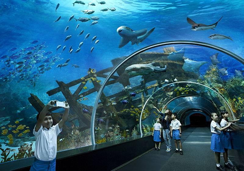 dia-diem-du-lich-singapore-thuy-cung-sea-aquarium-singapore