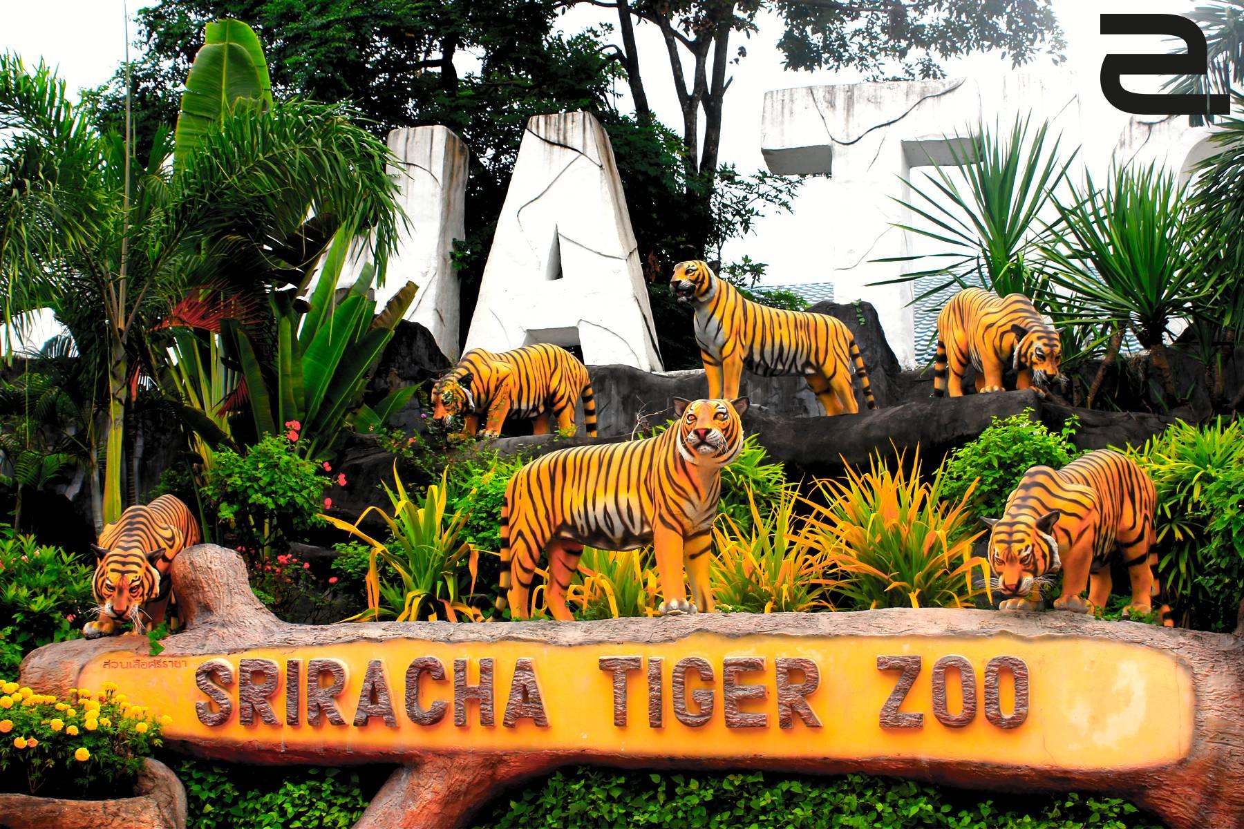 du-lich-thai-lan-tigerzoo